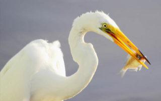 Nature around Bradenton, Florida