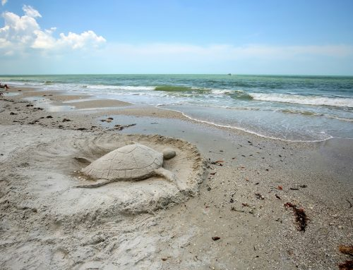 7 Facts about Florida's Gulf Coast